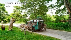 Atraksi Binatang Di  Safari